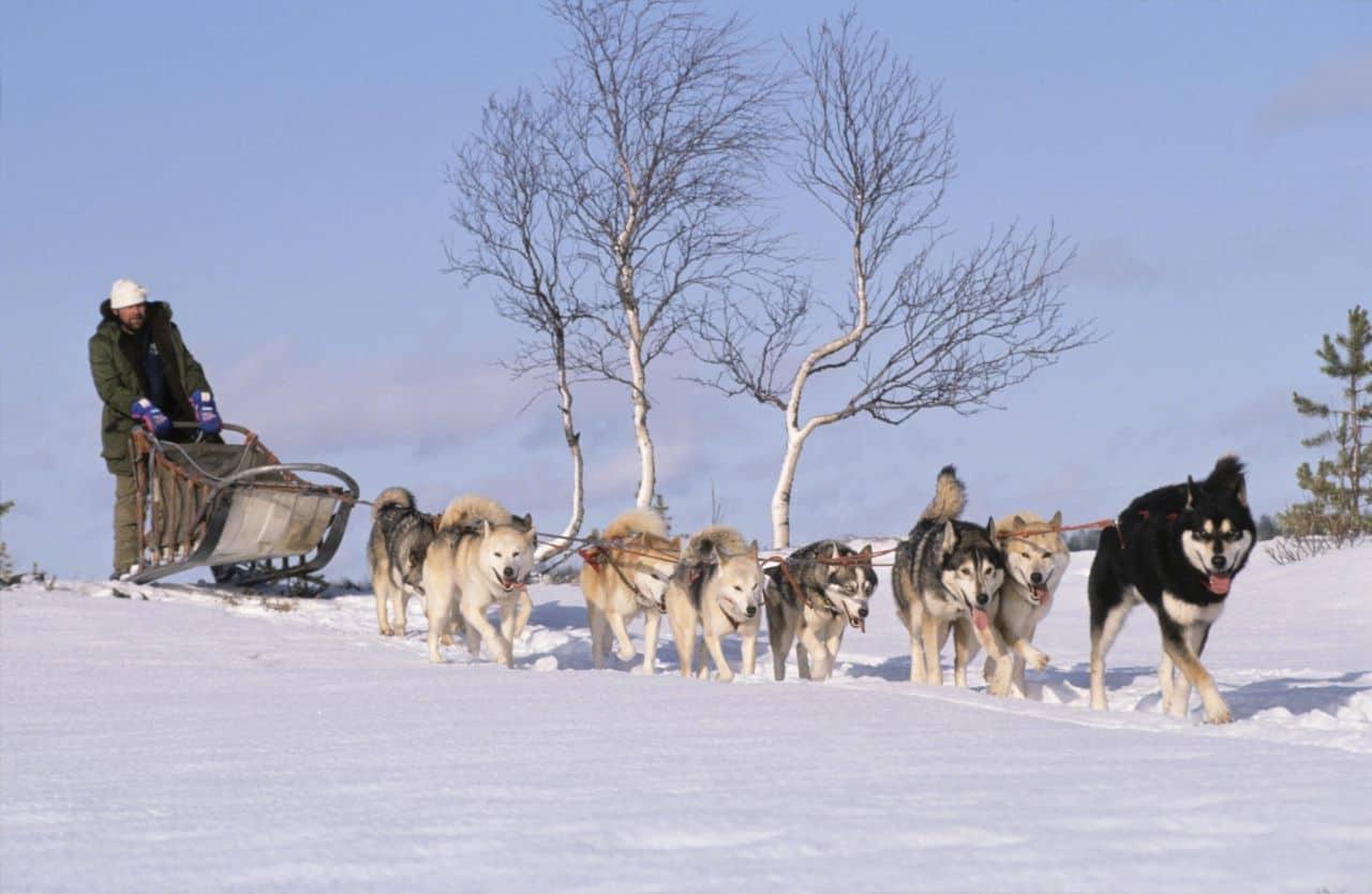 slitta con Husky Nord Europa