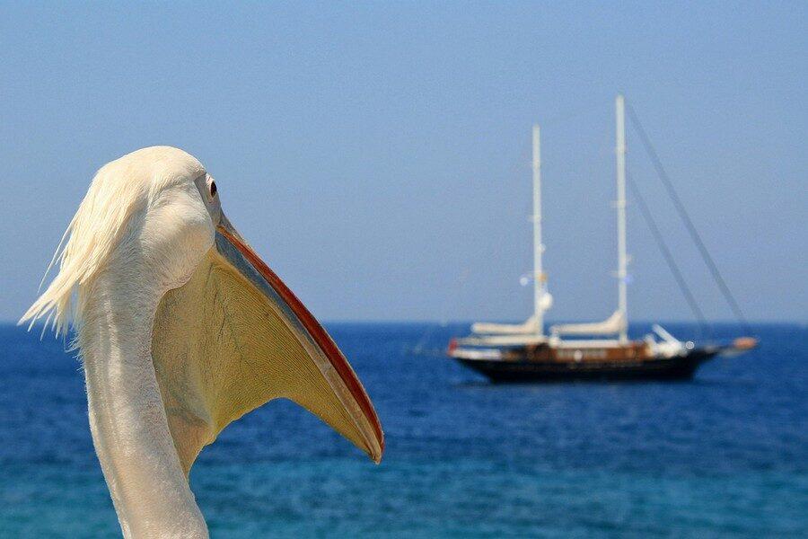 Cosa vedere a Mykonos Isola Greca dei Mulini a Vento Foto di Jm TD da Pixabay