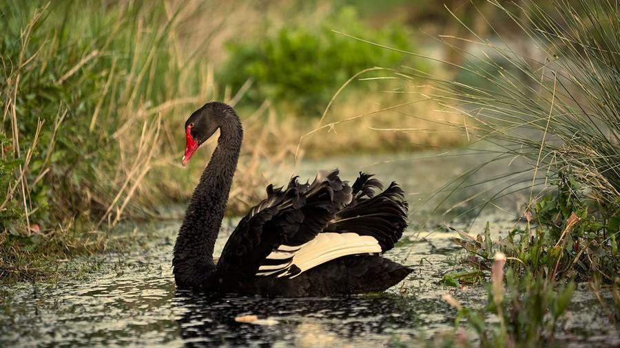 Elivi Skiathos nelle Sporadi soprannominata il cigno nero